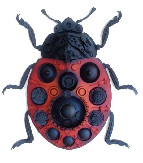 Coccinellidae  Ladybug